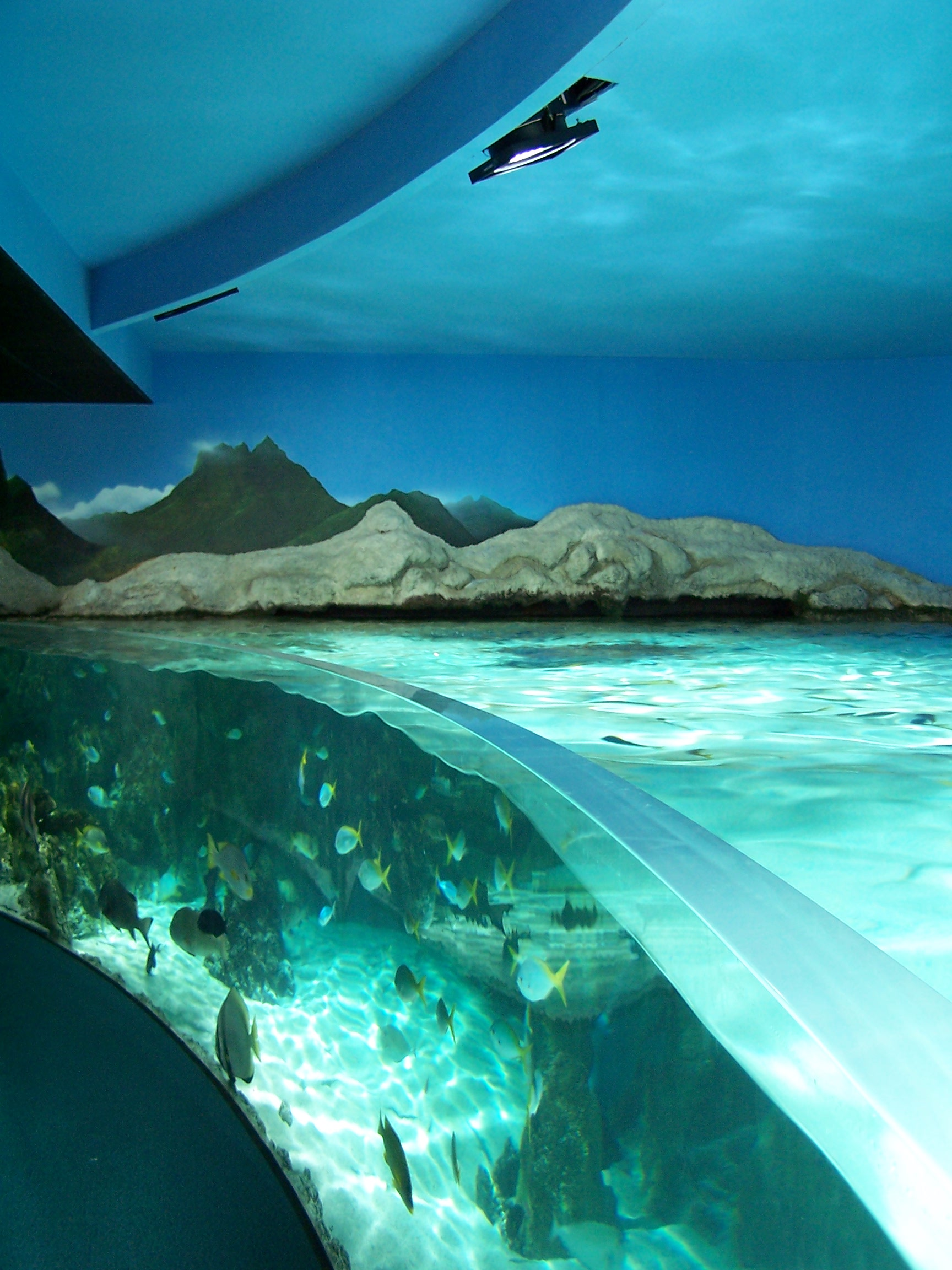 File:Aquarium de La Rochelle - Bassins 005.jpg - Wikimedia Commons
