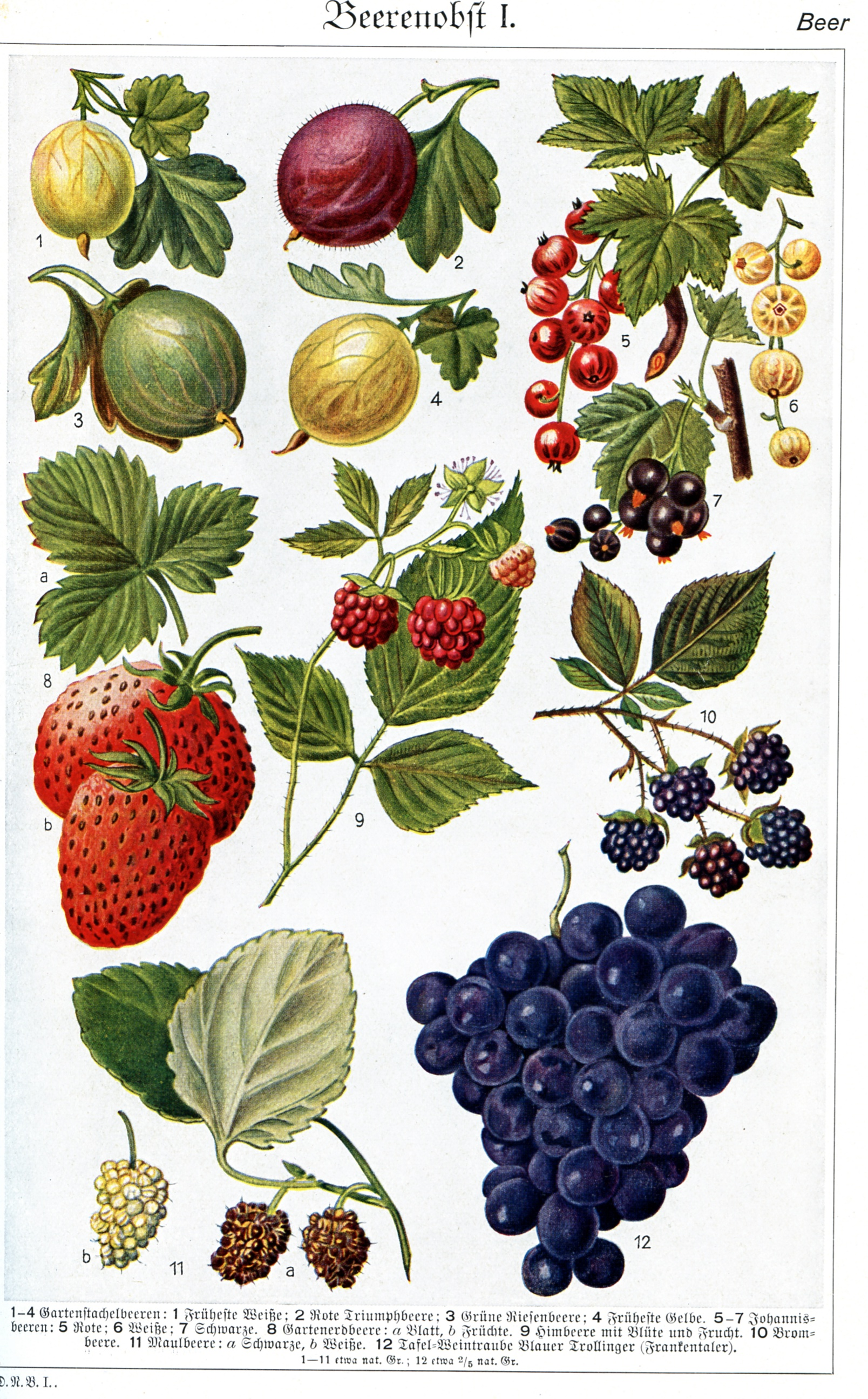 Berries for healthy diet