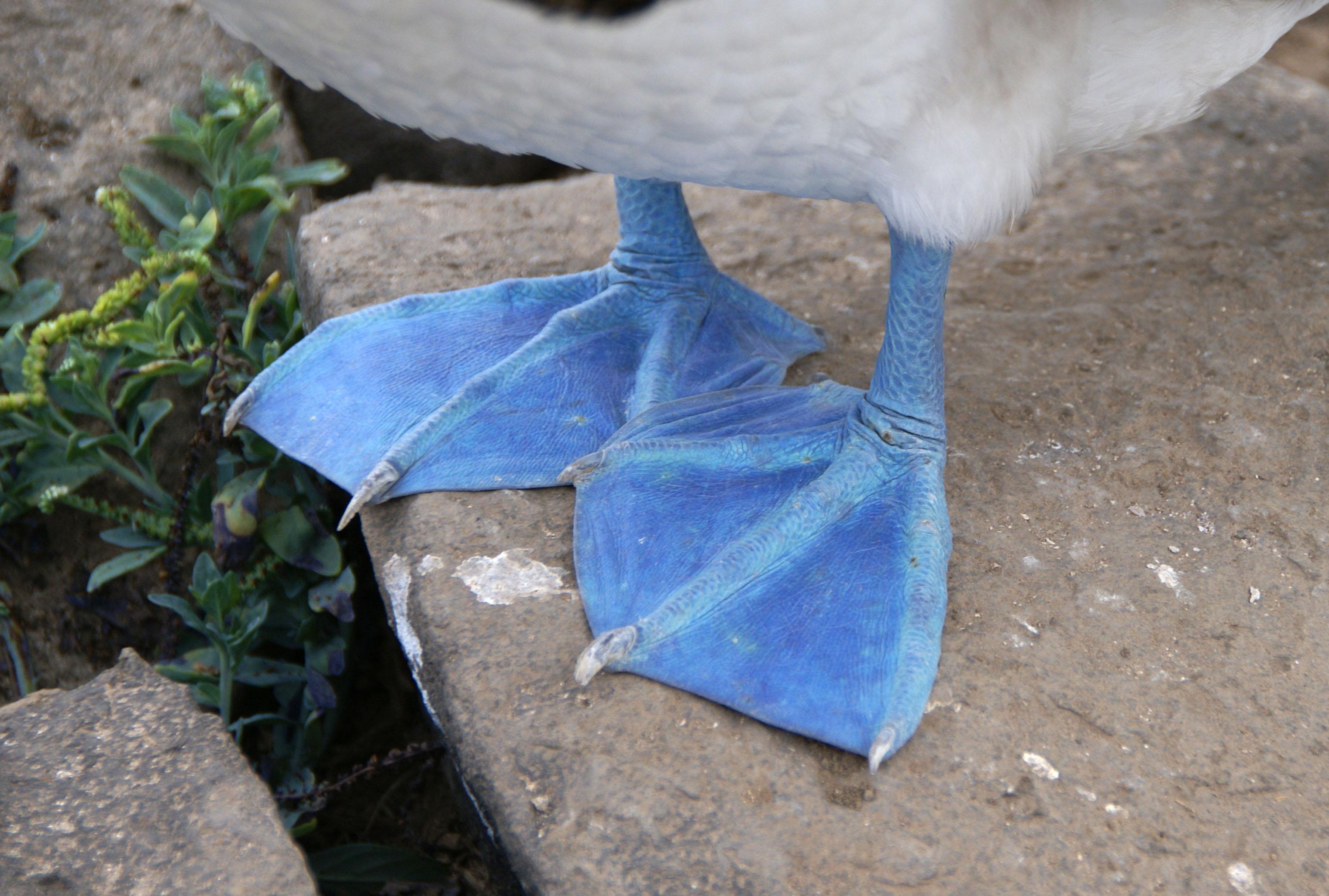 Bird feet and legs - Wikiwand