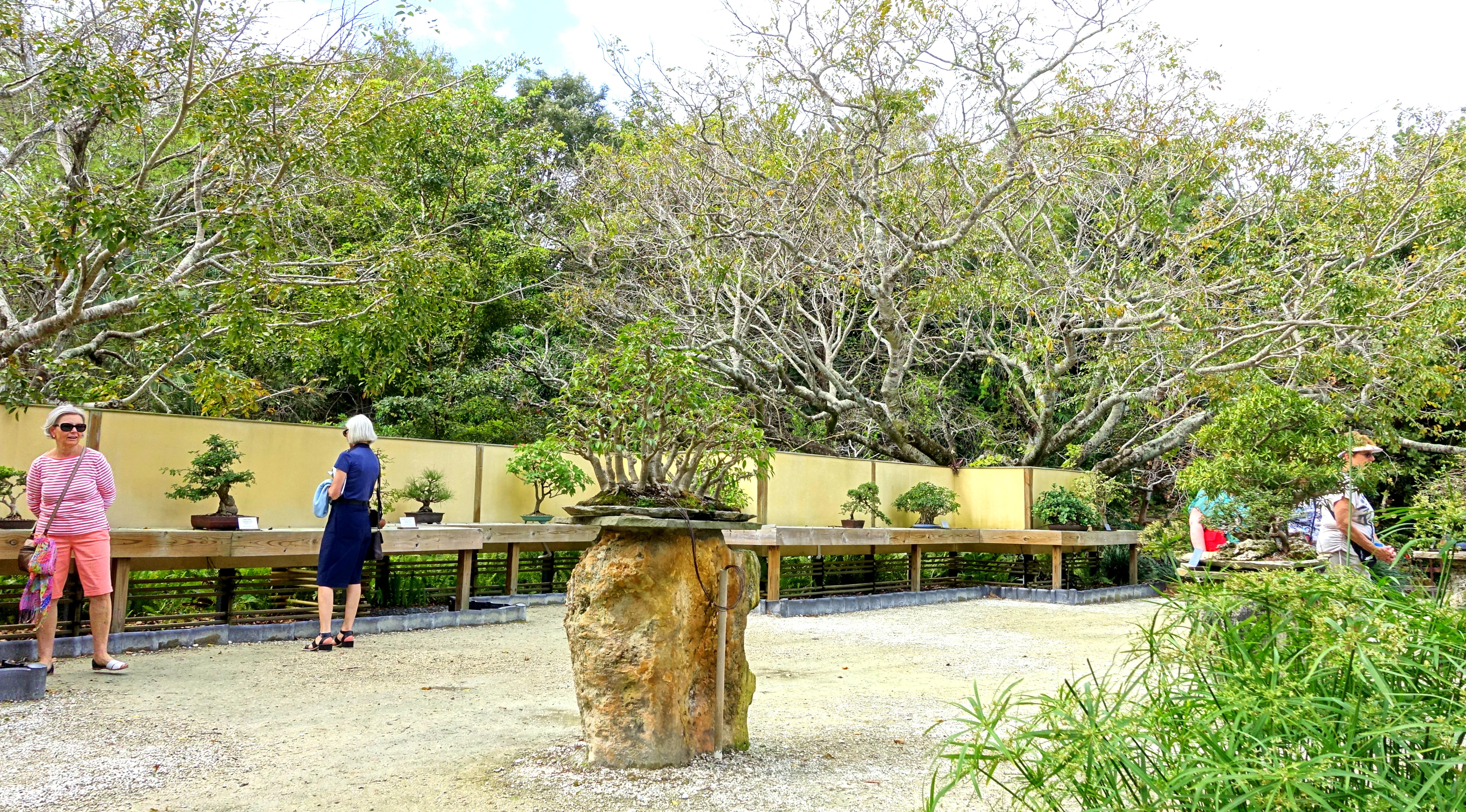 File:Bonsai display - Morikami Museum and Japanese Gardens - Palm ...