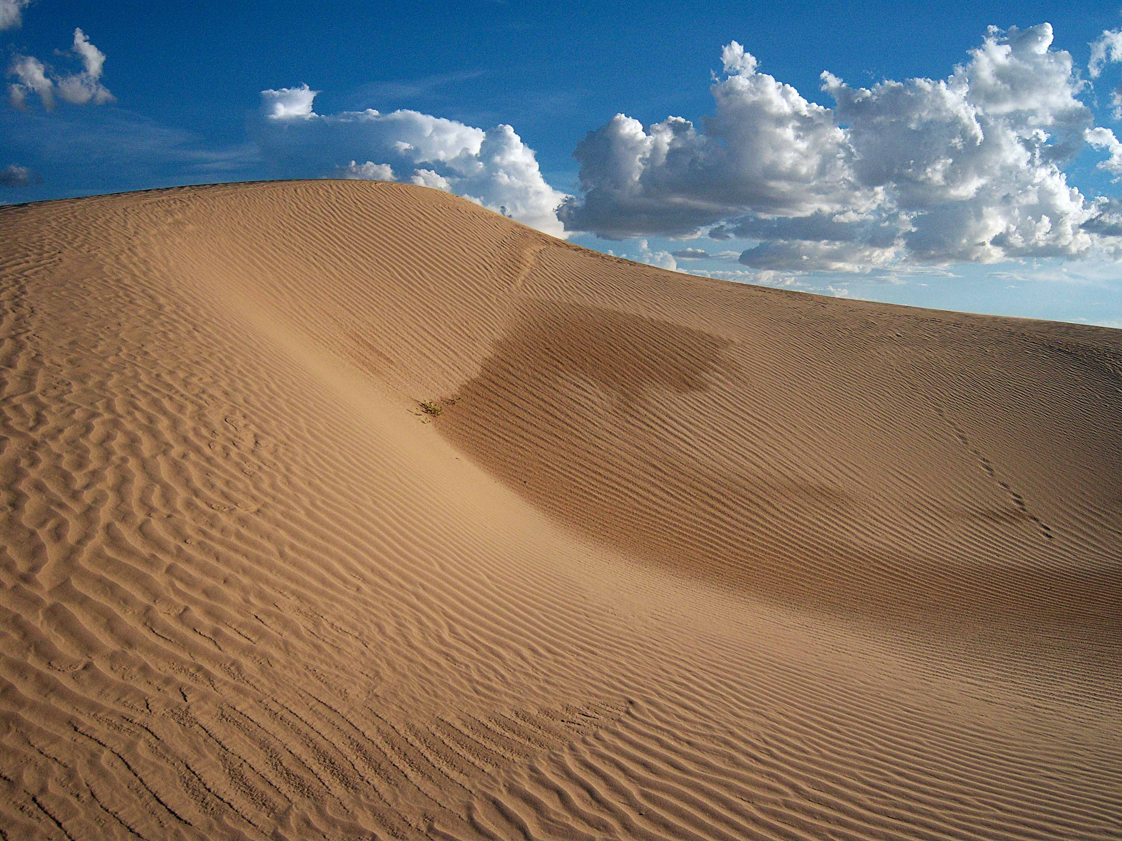 Image result for Samalayuca Dune Fields, Mexico
