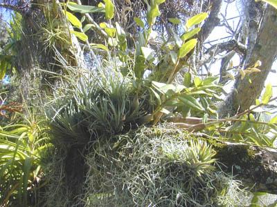 plante humidité