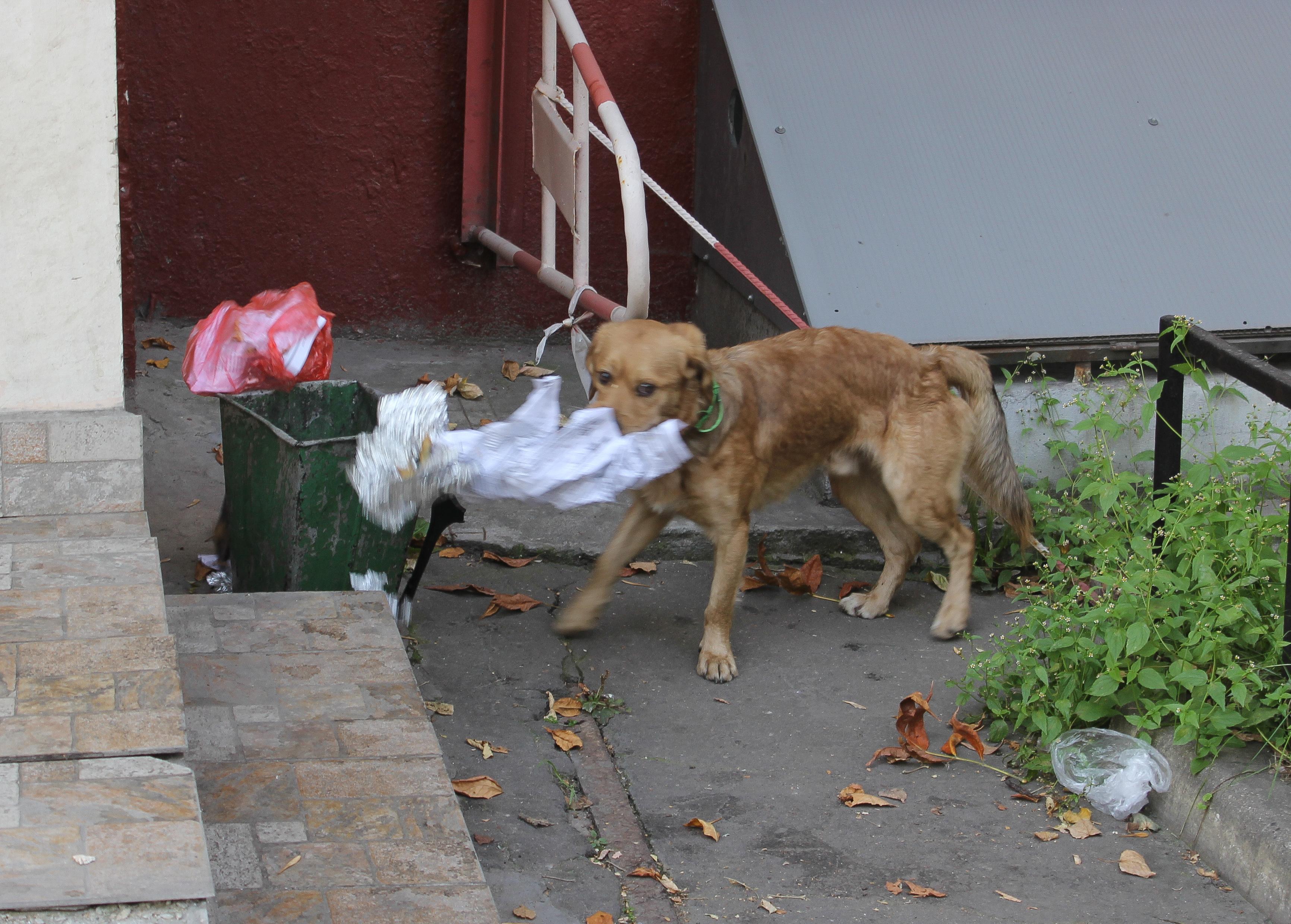 Stray Dog Rescue