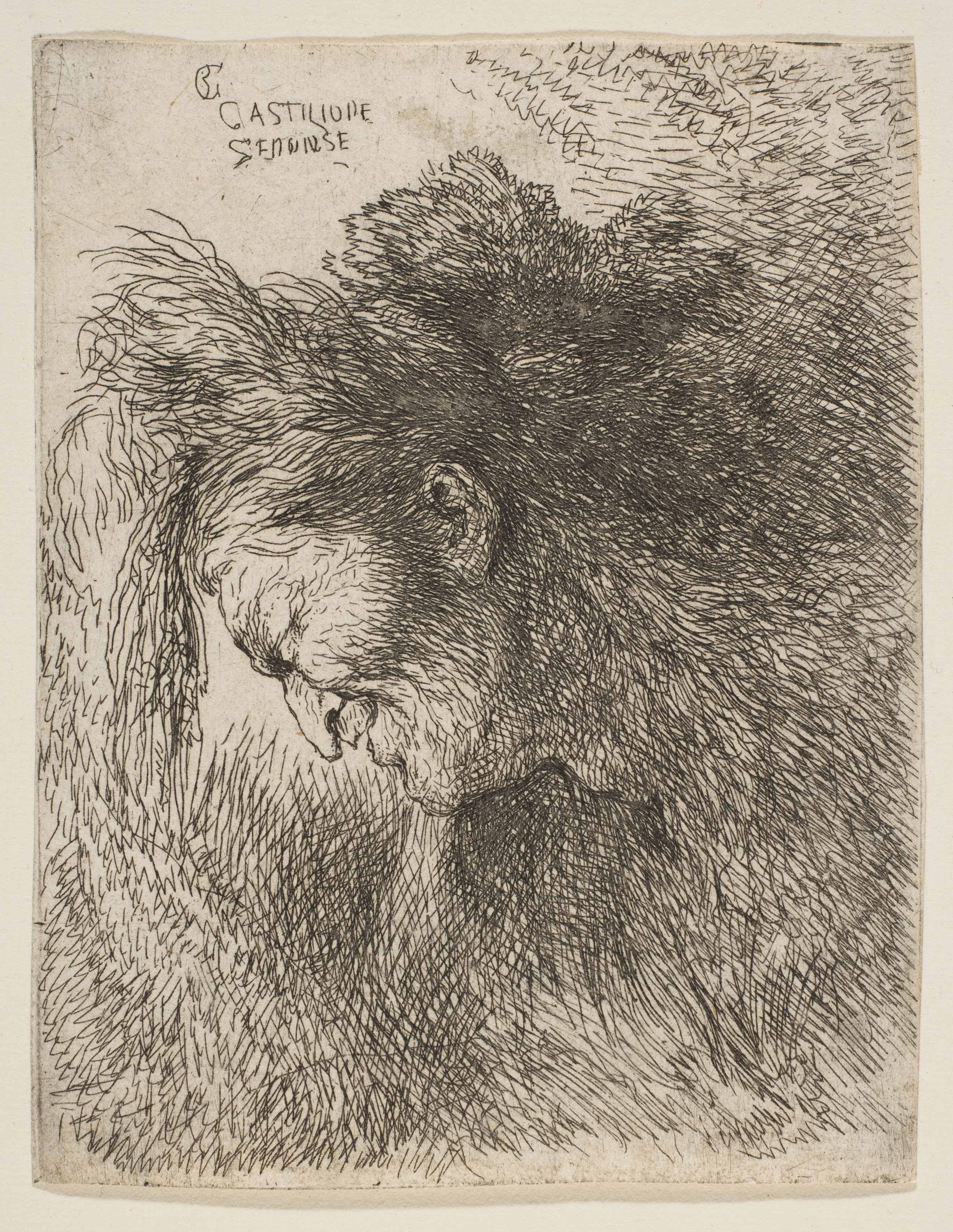 File Head Of An Old Man Looking Down Facing Left Met Dp816537 Jpg Wikimedia Commons