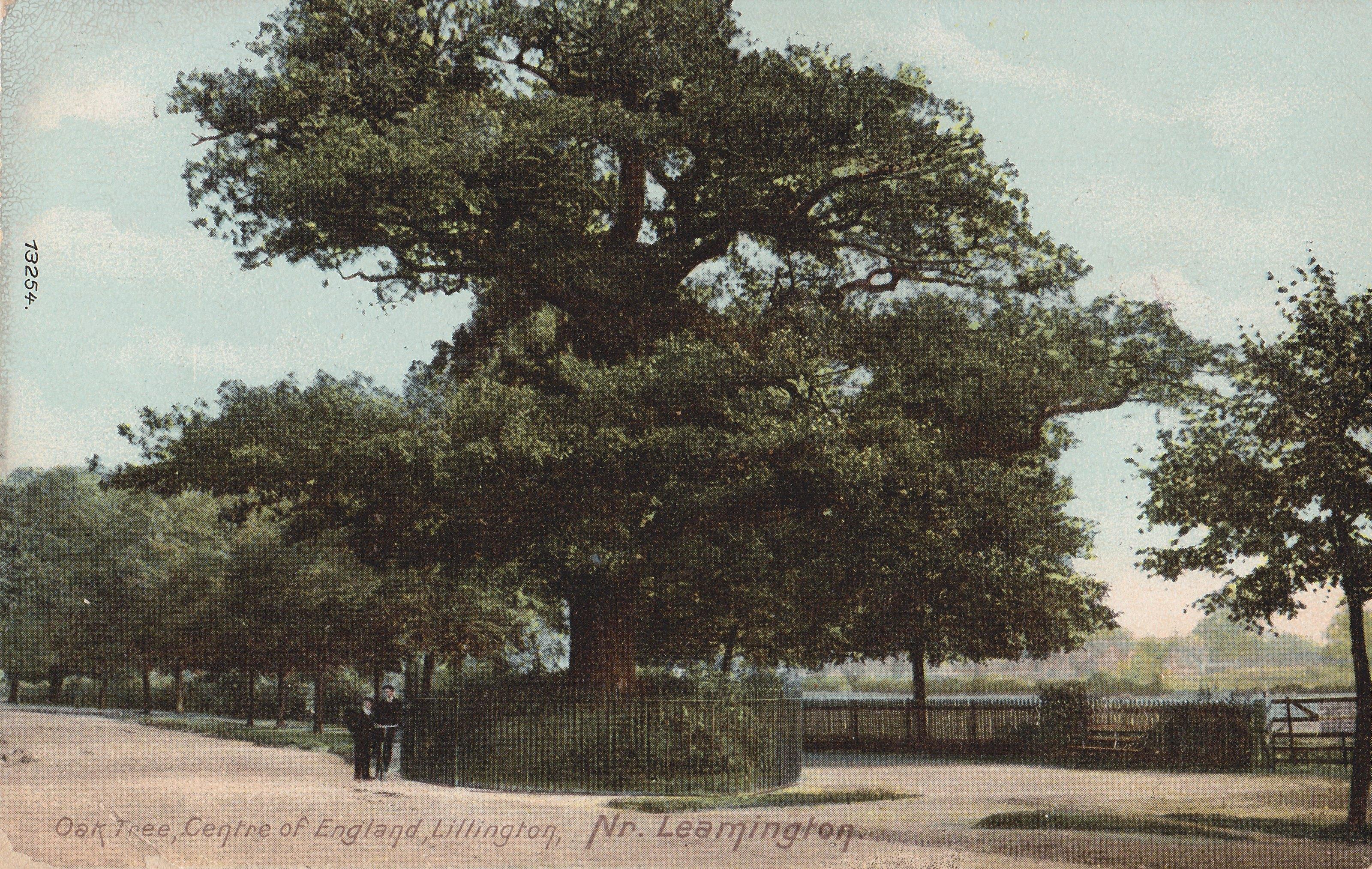 lillington midland oak 1909.jpg