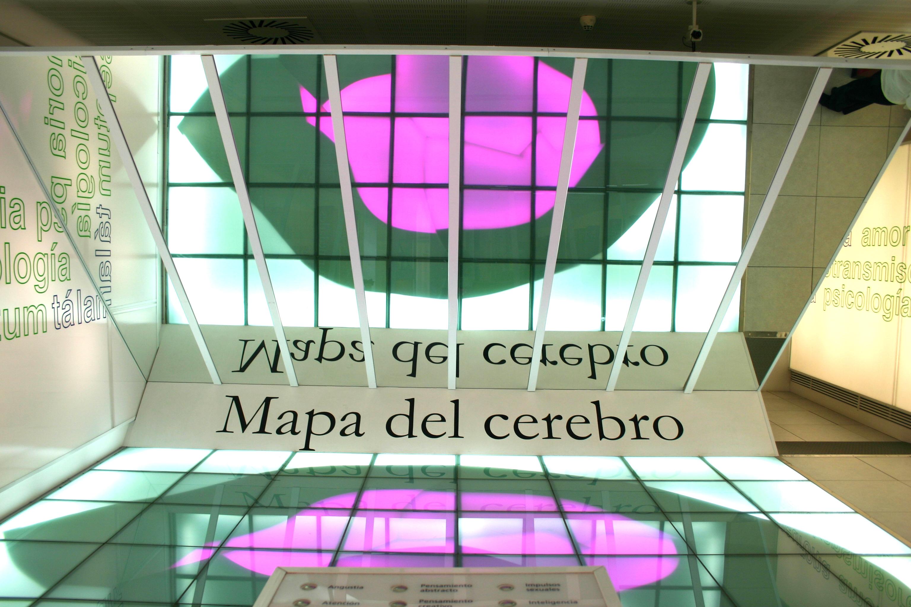 Archivo Museocienciavalladolidcerebro Jpg Wikipedia La