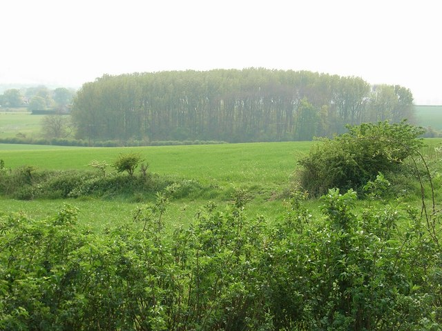 File:Newclose Copse - geograph.org.uk - 419244.jpg