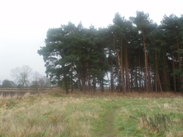 Part of Glebe Plantation in Wheldrake Wood - geograph.org.uk - 373795