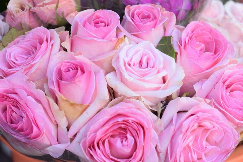 """פרחים, ת""""א"""