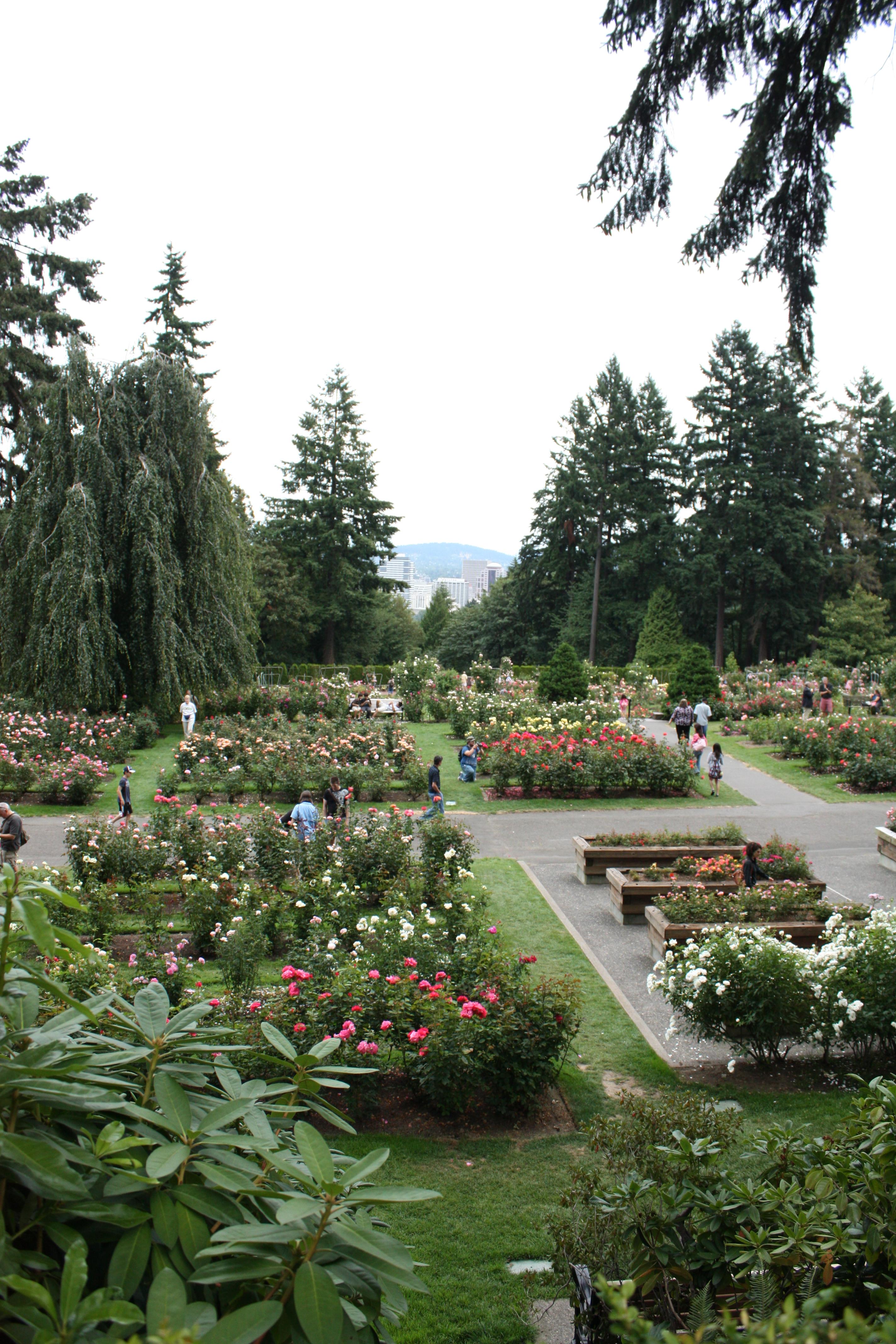 File Portland Rose Garden Jpg Wikimedia Commons