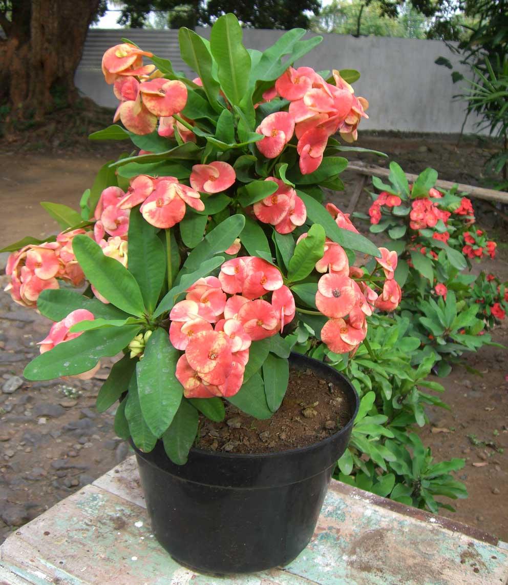 Колючие комнатные цветы название и фото