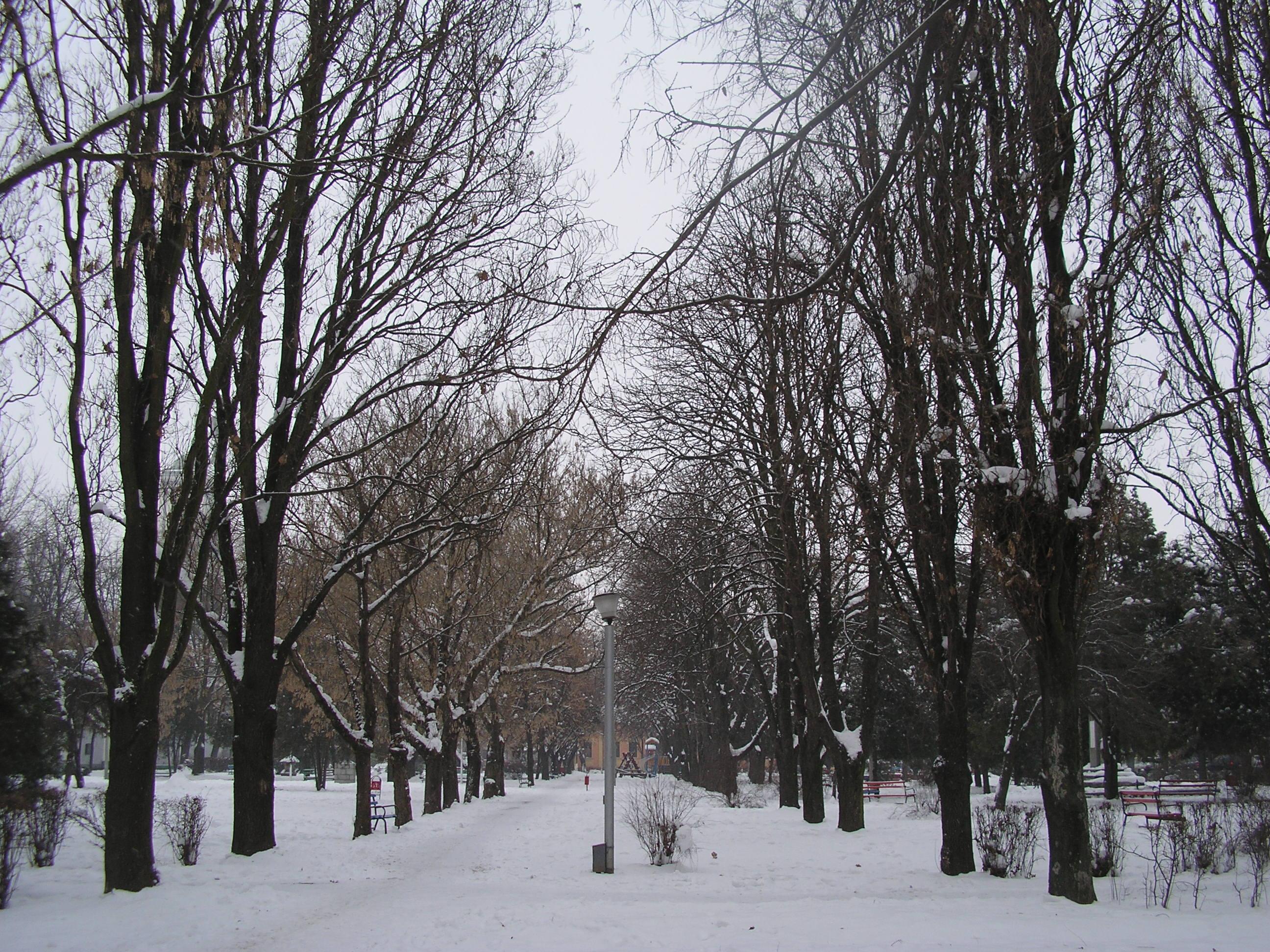 Fişier:RO BH Salonta Alee parc.JPG