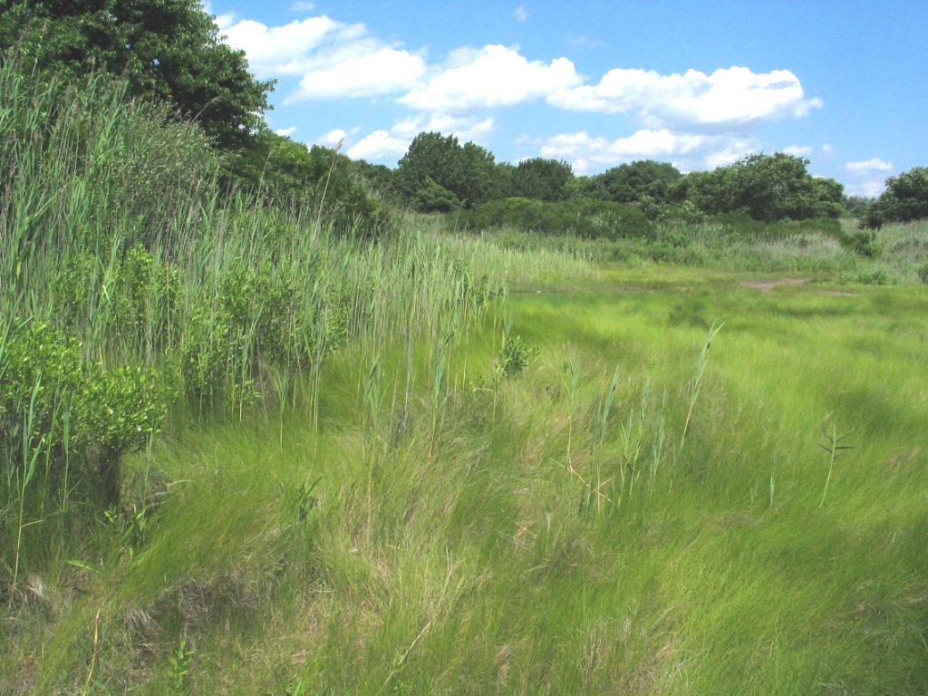 High marsh in the Marine Park Salt Marsh Nature Center in Brooklyn, New York