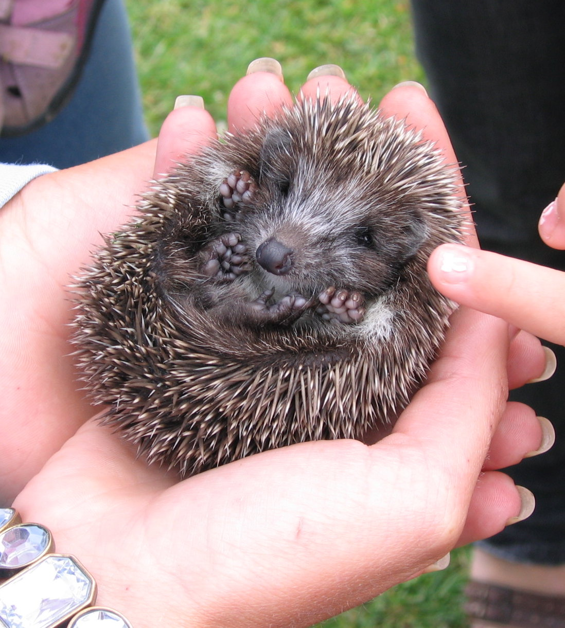 Can Hedgehogs And Dogs Live Together
