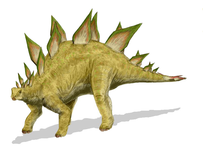 Depiction of Stegosauridae
