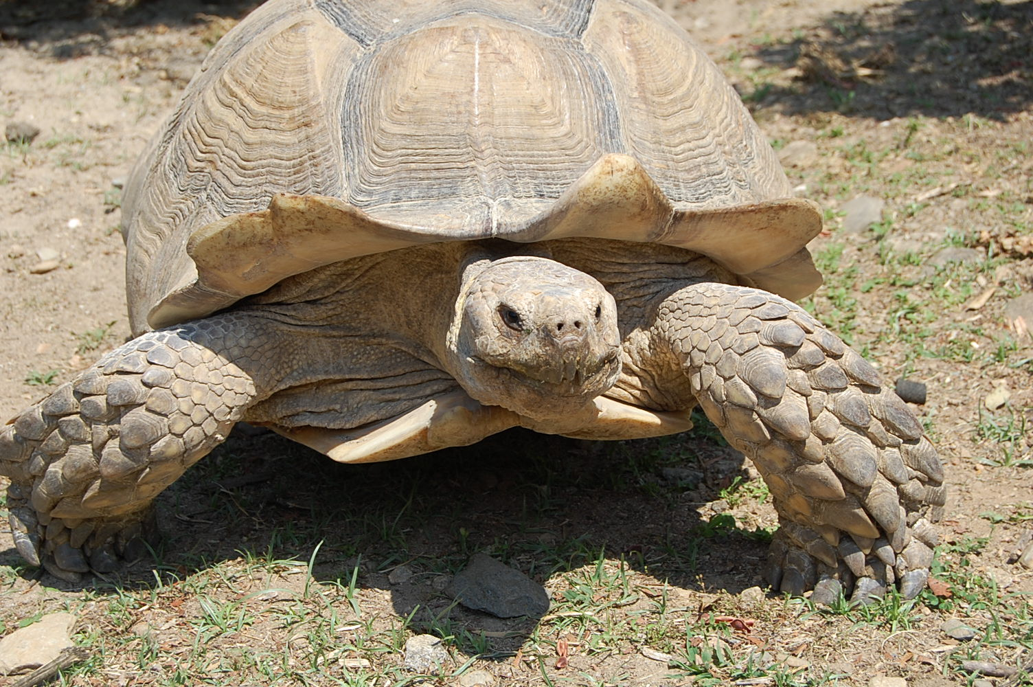 La vall e des tortues wikip dia - Images tortue ...
