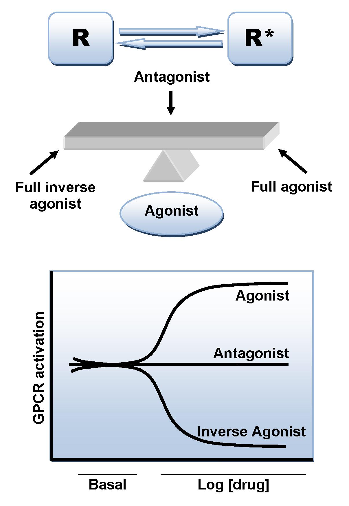 Adrenergic antagonist - Wikipedia