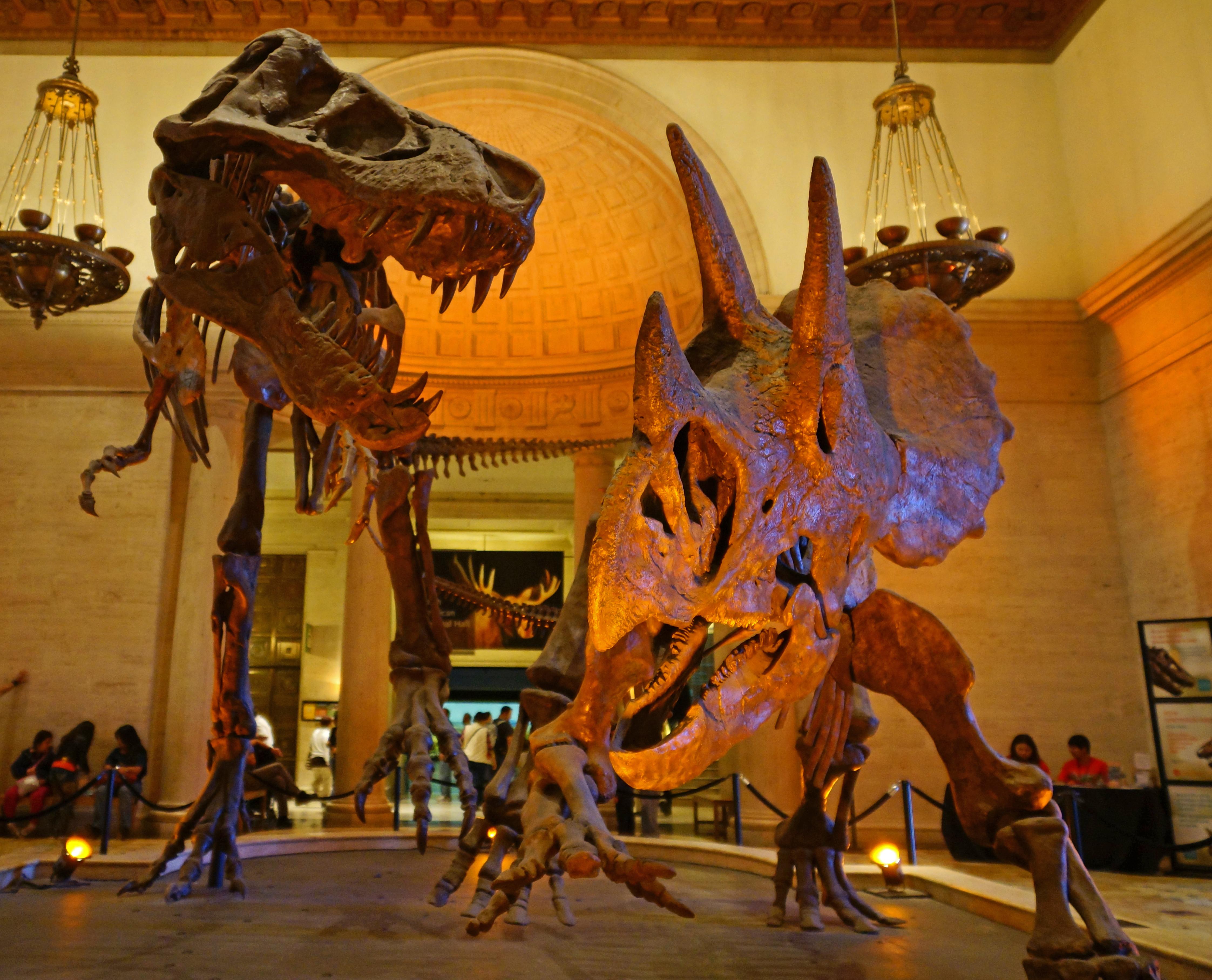 Los Angeles Natural History Museum Membership Tax Deductible