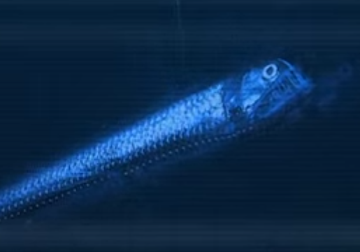 Viperfish_small.png