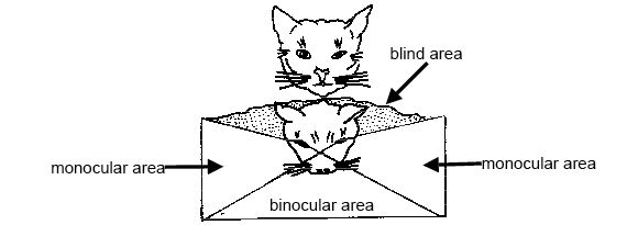 Anatomy and physiology of animals Well developed binocular vision.jpg