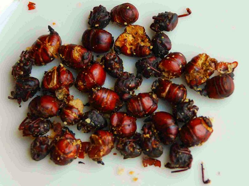 Roasted ants in Colombia