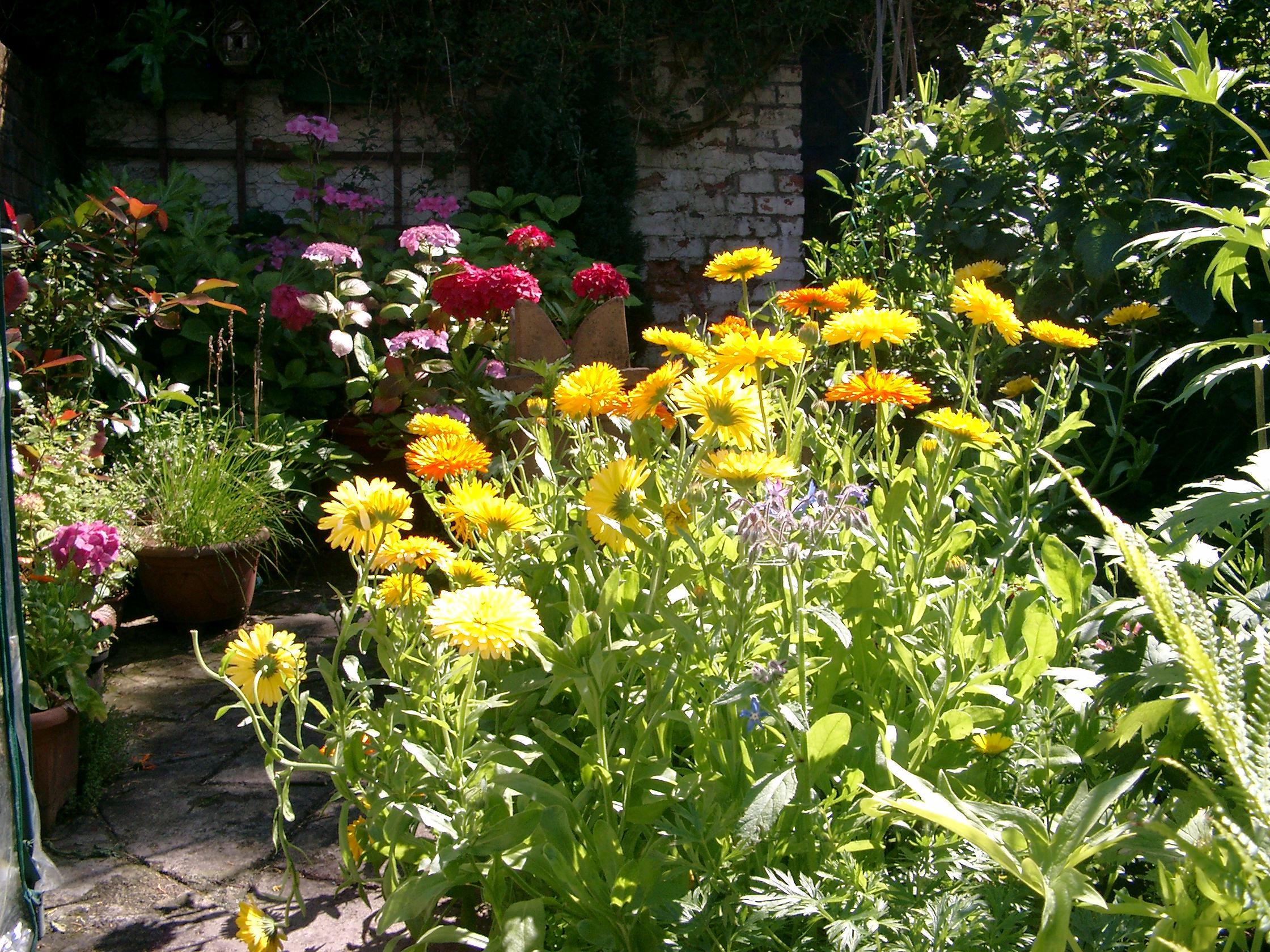 Summer Flower Garden Flowers