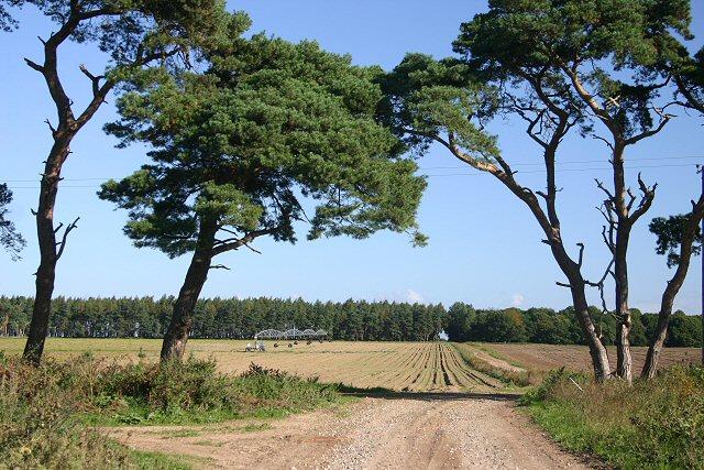 File:Brldleway on the Elveden Estate - geograph.org.uk - 545907.jpg