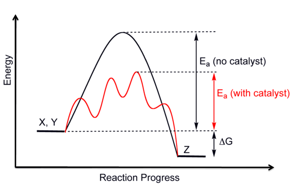 energy profile chemistry wikipedia : reaction pathway diagram - findchart.co