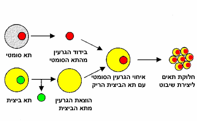 filecloningjpg wikimedia commons