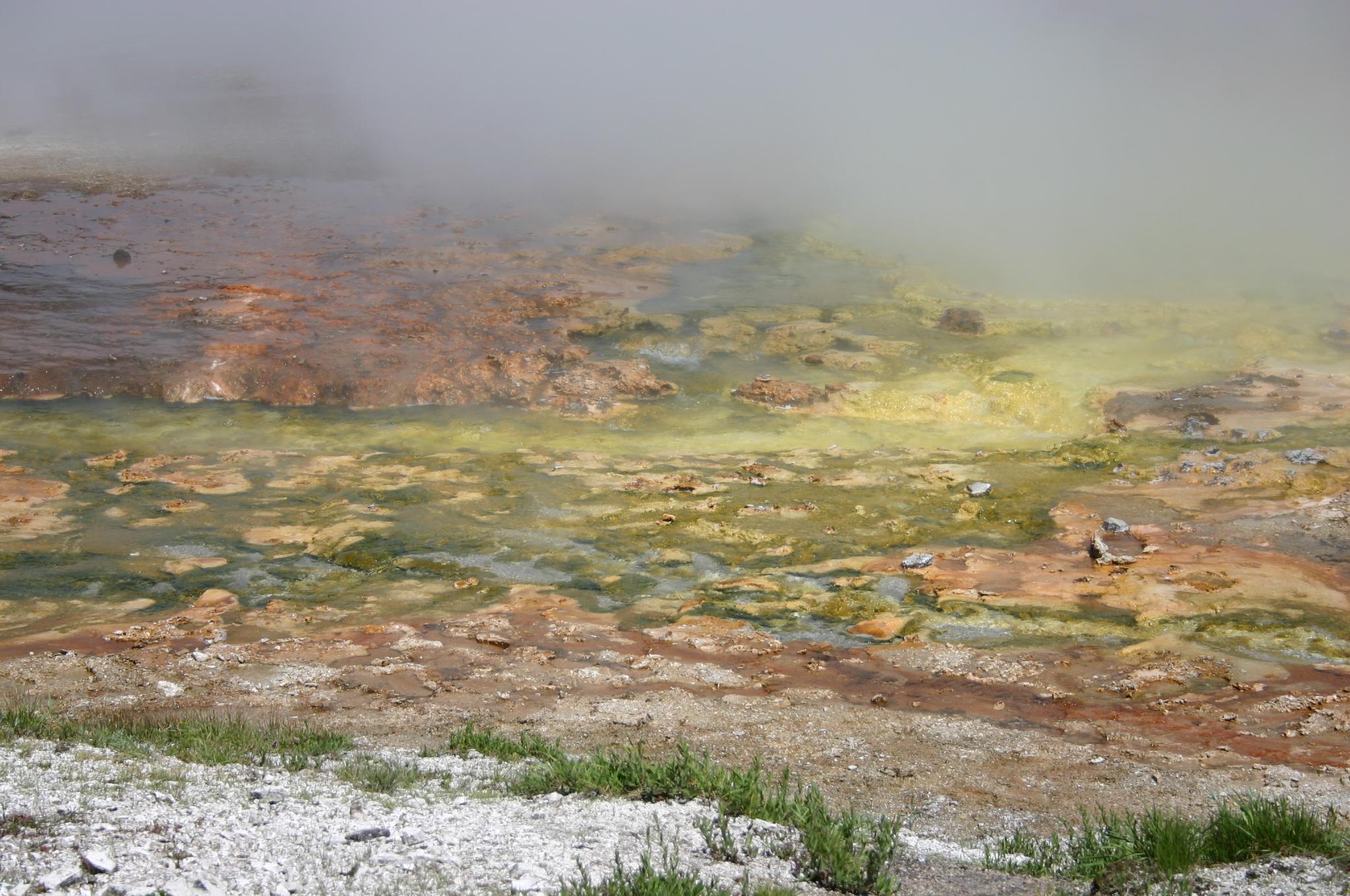 Ces choses que vous ne saviez pas, qui vous ont étonnés et que vous voulez partager! - Page 7 Colourful_Thermophilic_Archaebacteria_Stain_in_Midway_Geyser_Basin