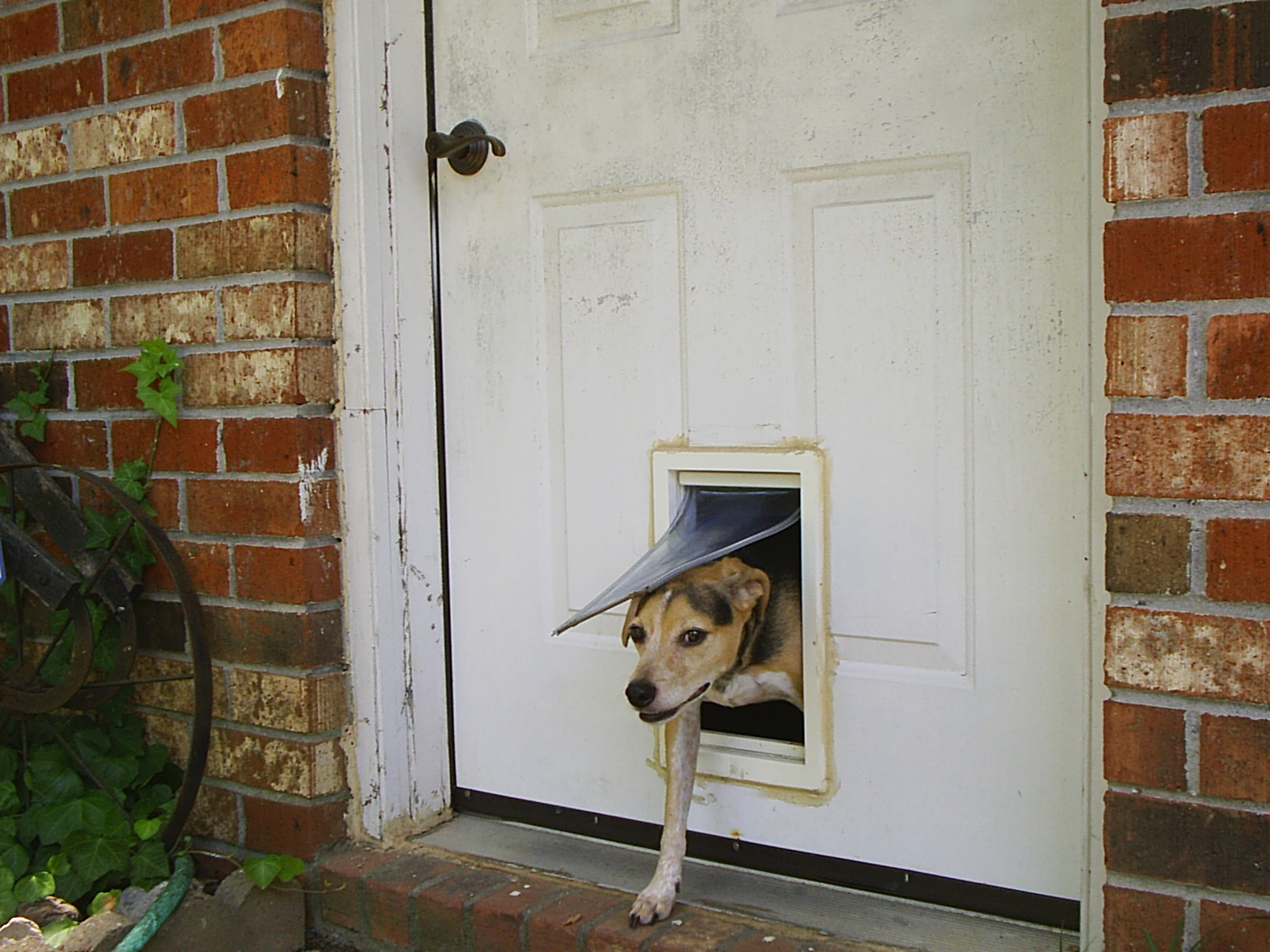 Pet door - Wikipedia