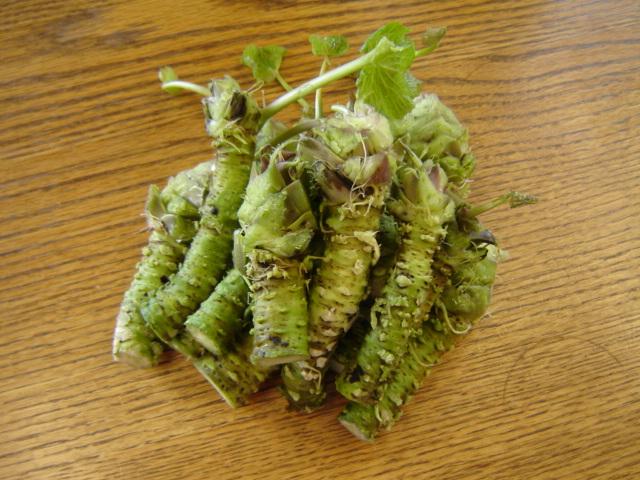 FileFresh wasabi rhizomesjpg  Wikimedia Commons # Wasbak English_182340