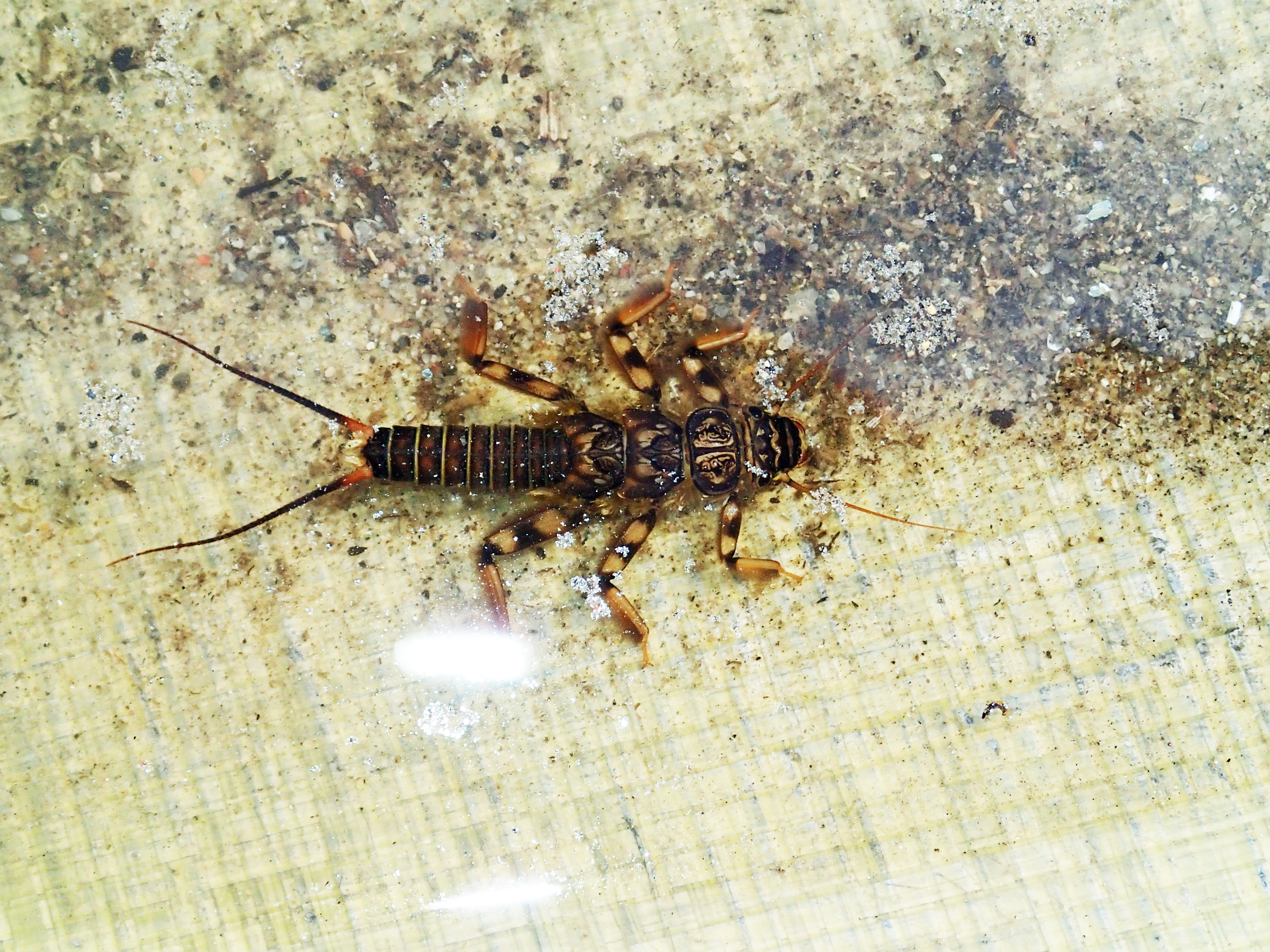 Freshwater Macroinvertebrates in the Dungeness | Dungeness