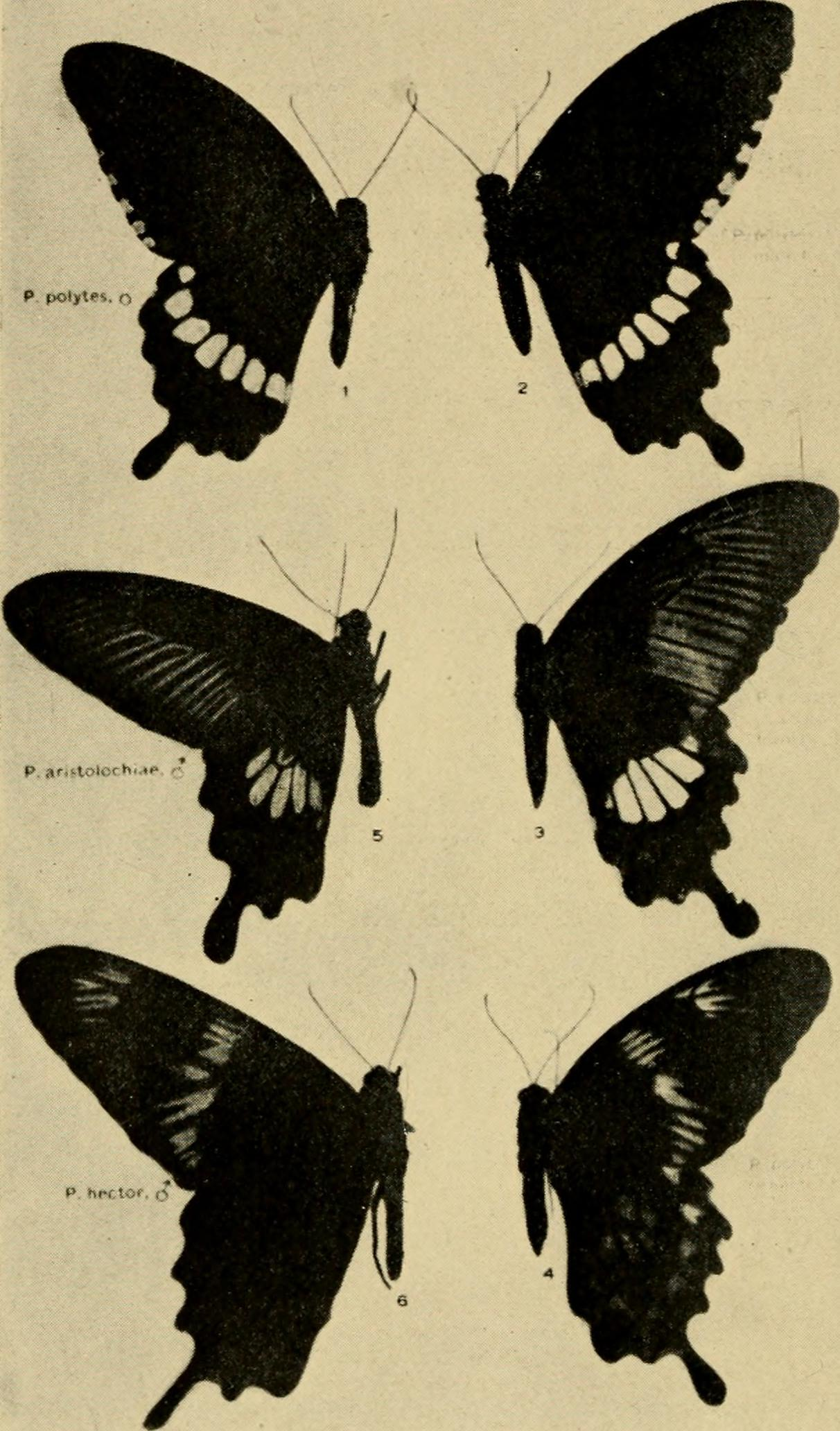Heredity and sex (1913) (14761666521).jpg English: Identifier: hereditysex00morg (find matches) Title: Heredity and sex Year: 1913 (1910s) Authors:
