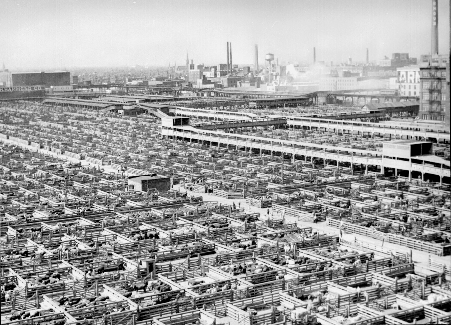 http://upload.wikimedia.org/wikipedia/commons/7/71/Livestock_chicago_1947.jpg