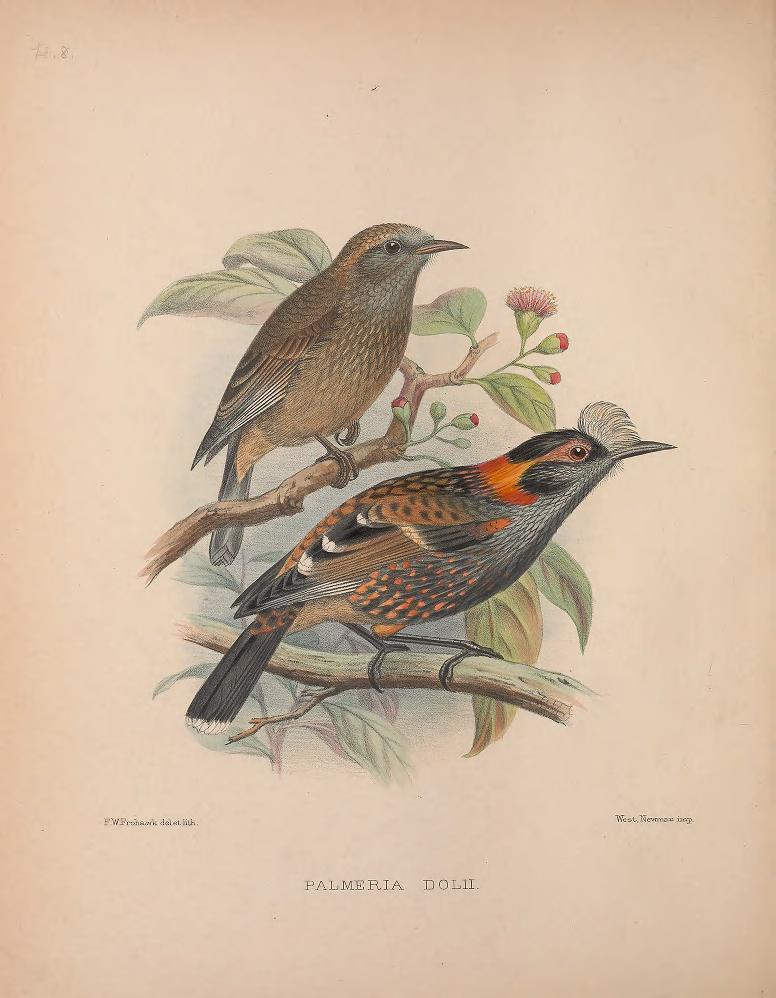 Fringillidae image