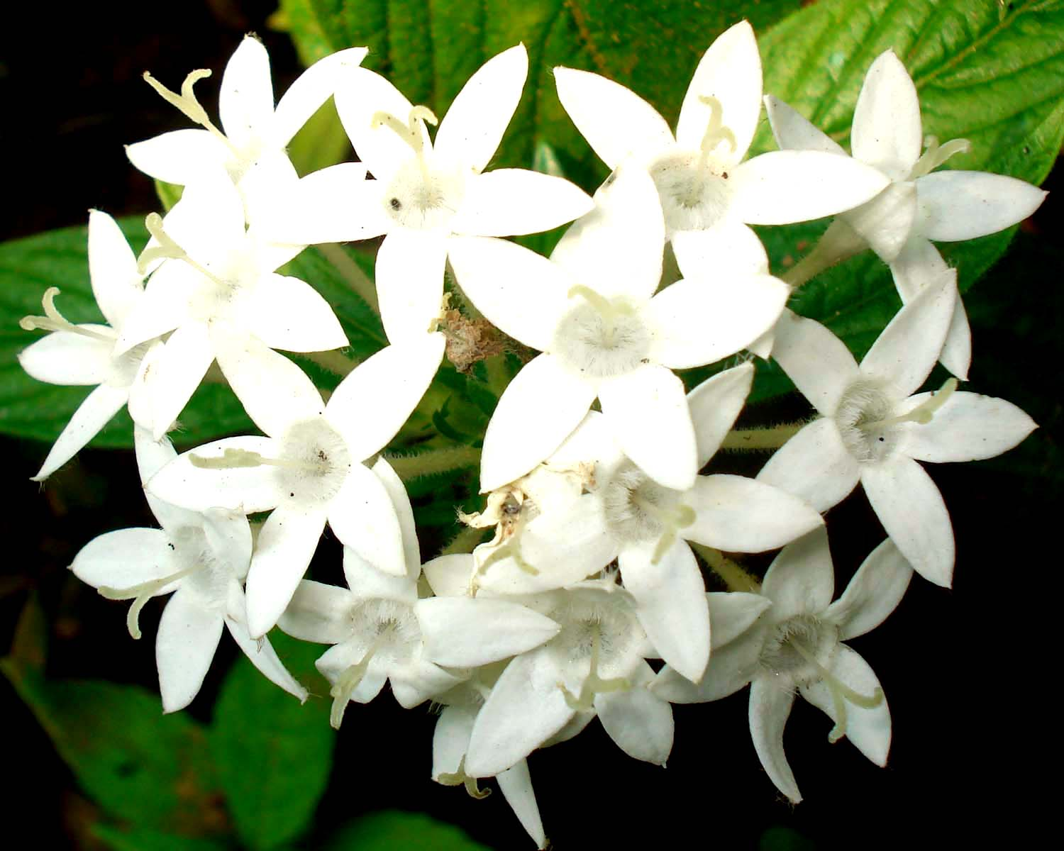 White Flowers Mar 13 2013 235120 Images Search Gallery