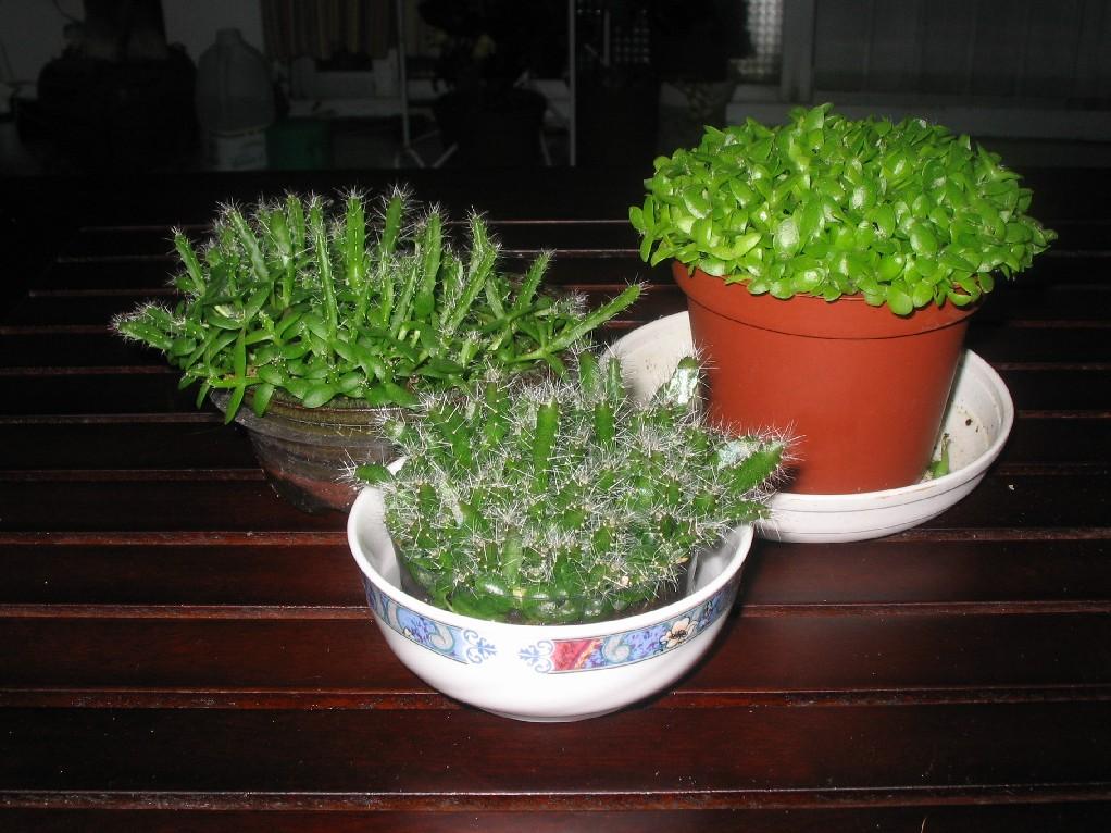 pot pour semis