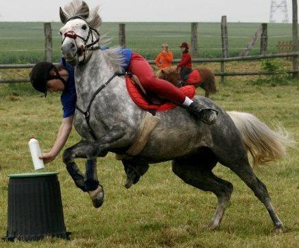 Pony games vikidia l encyclop die des 8 13 ans - Jeux de poney ville gratuit ...
