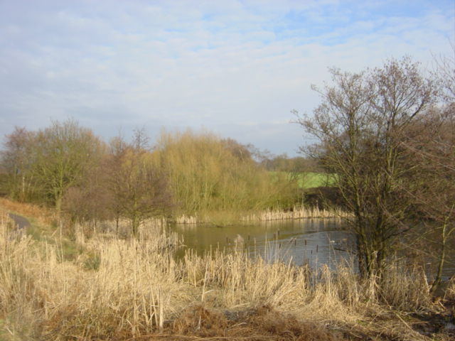 Reedbed at Carr Mill Dam - geograph.org.uk - 120579
