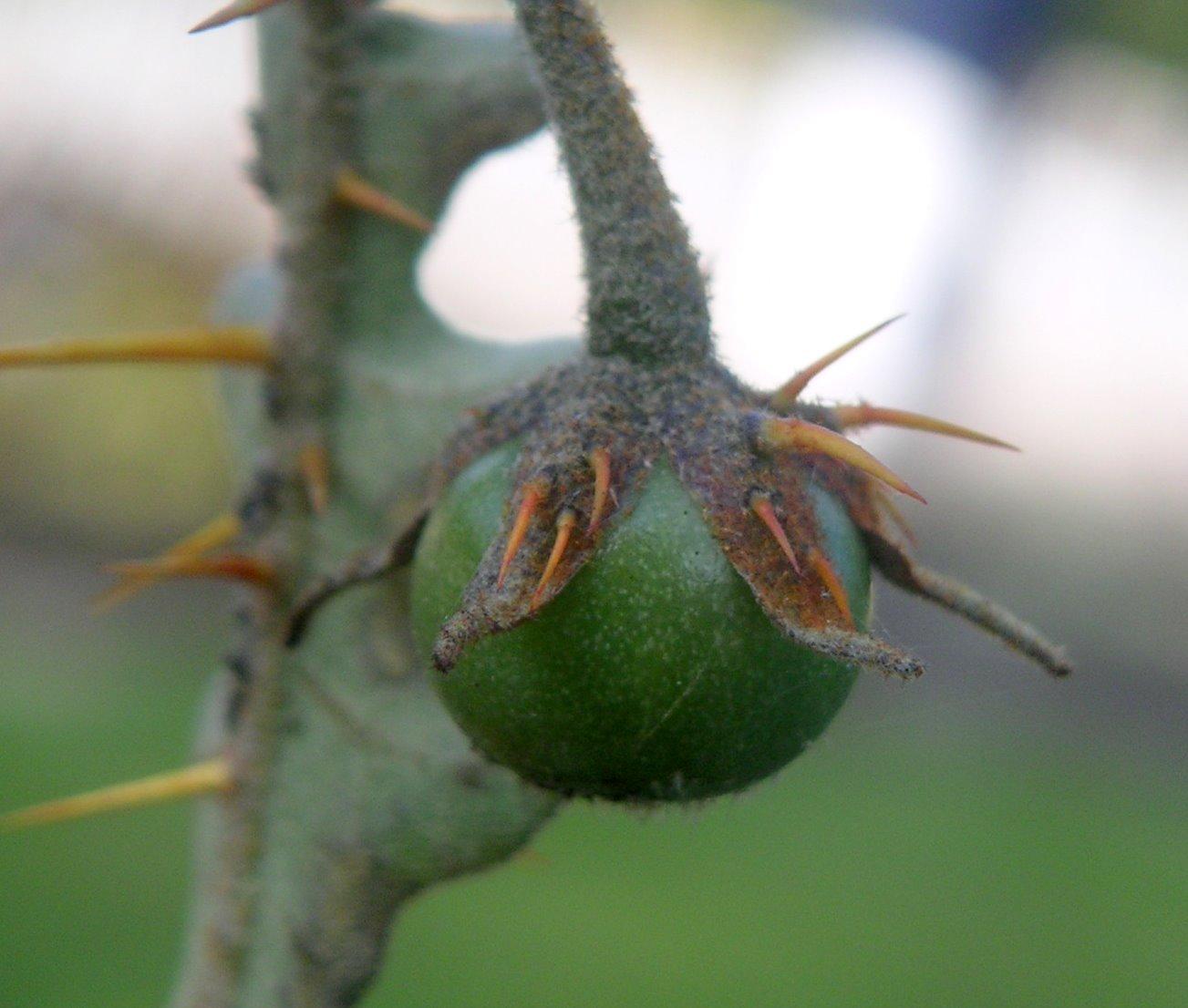 Las Plantas más raras y horribles  Taringa!