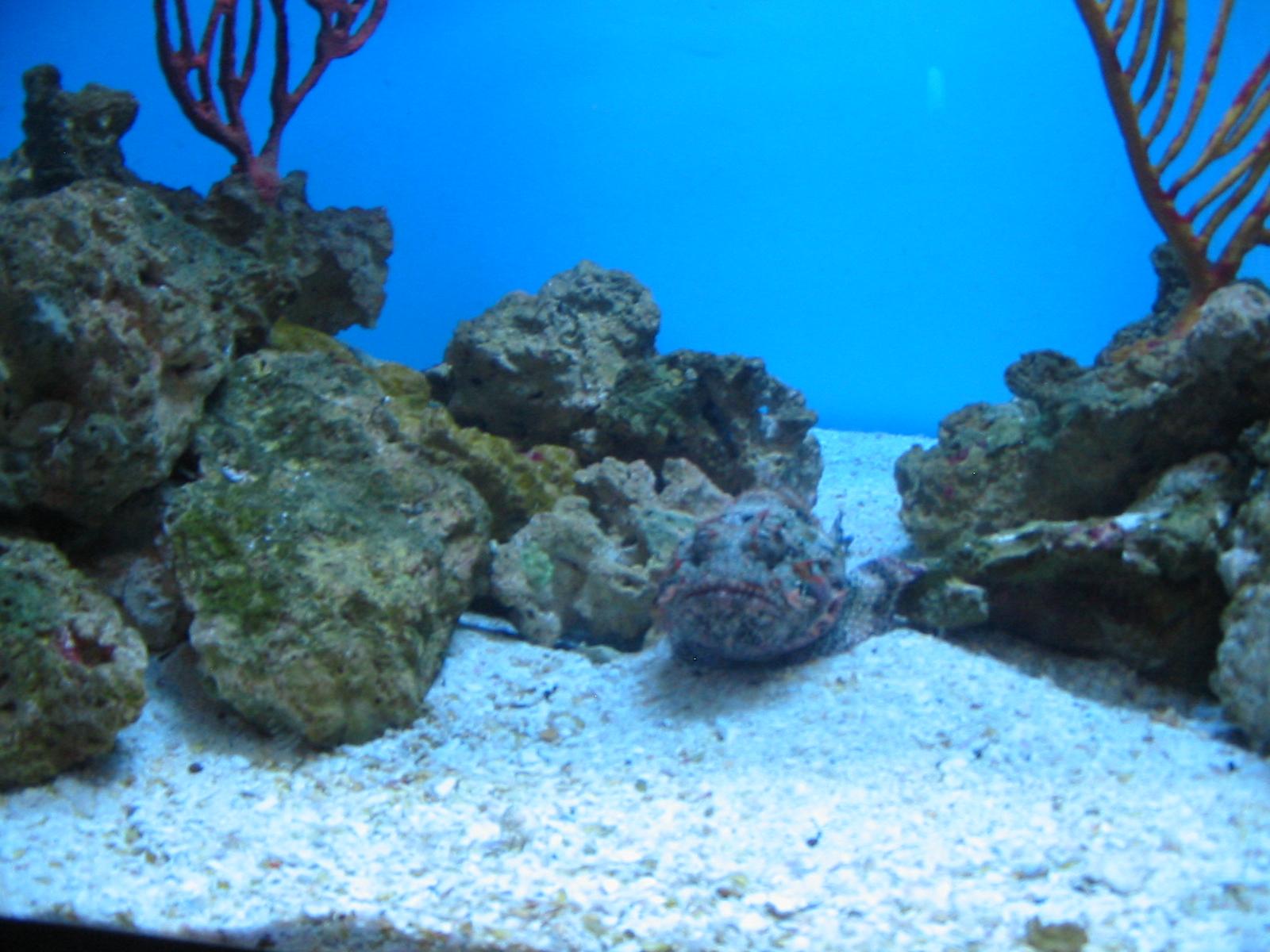 Stone fish bite for Stone fish facts