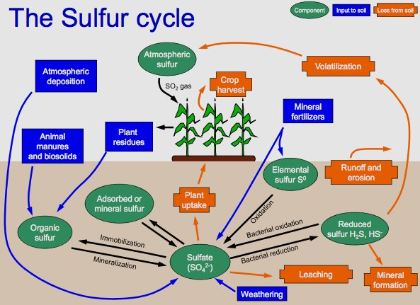 sulfur cycle The sulfur in the atmosphere is returned to the soil and water cycle when it rains sulfur can also be naturally released when volcanoes explode the hydrological cycle plays a critical role.