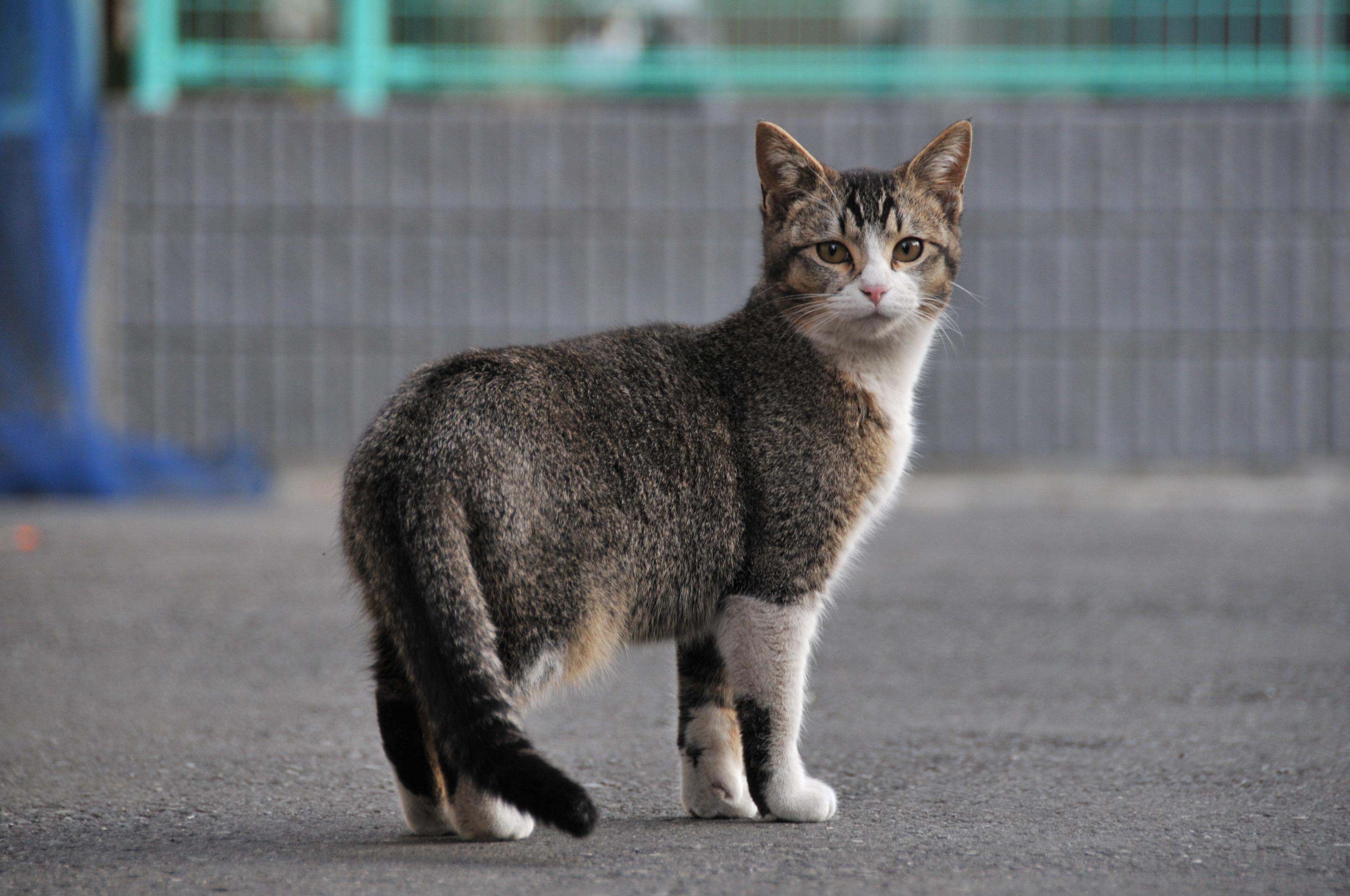 Ticked Tabby Cat Markings