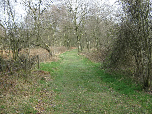 Track in Upper Lady Park Woods, Consall Nature Park - geograph.org.uk - 1213624