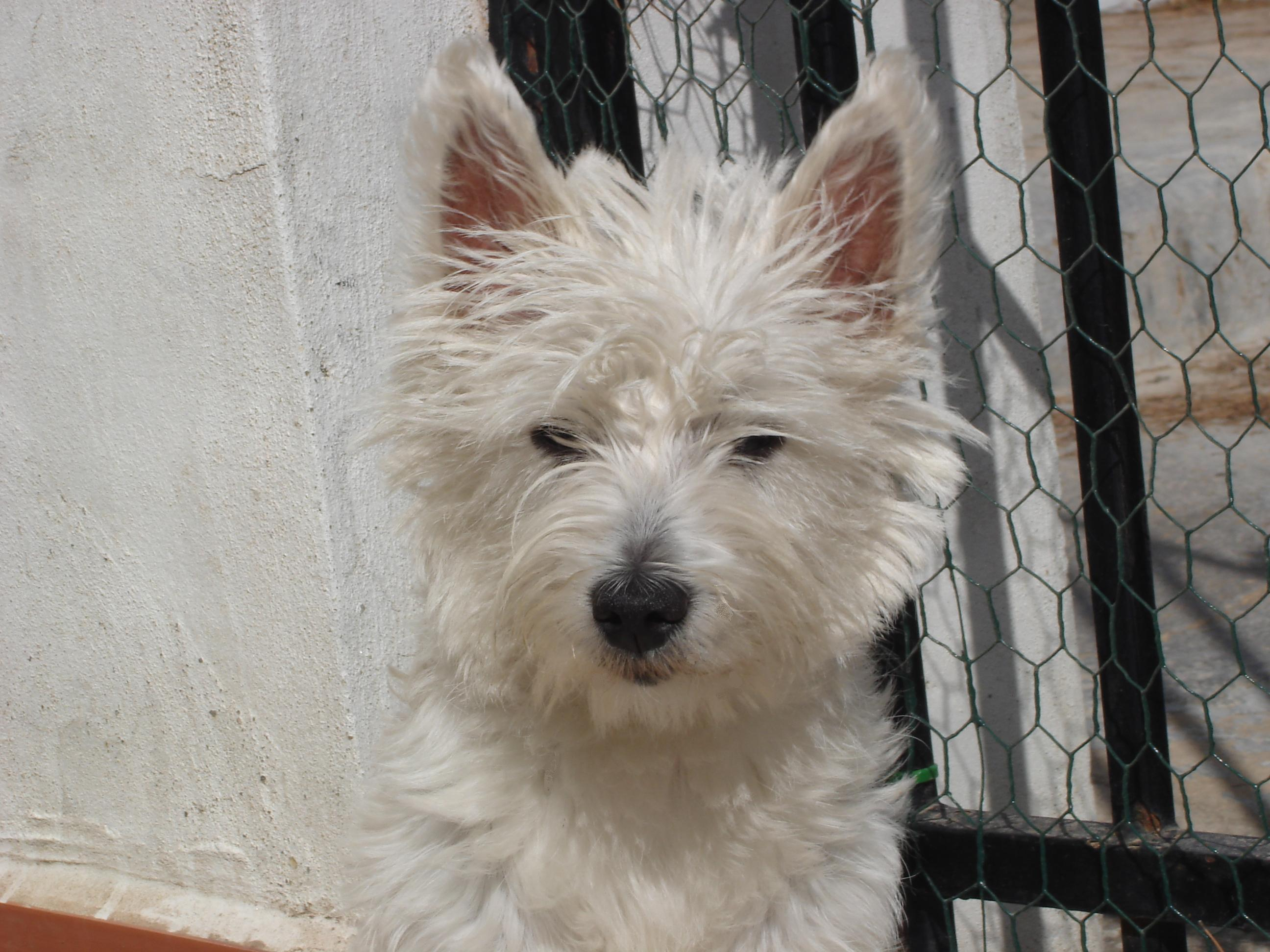 Grooming Equipment For West Highland Terrier Dog