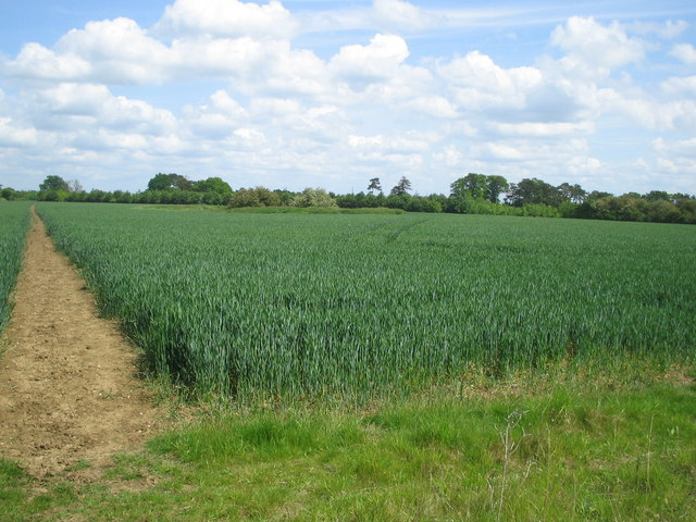 Wheat field and field boundary - towards Astwood - geograph.org.uk - 438951