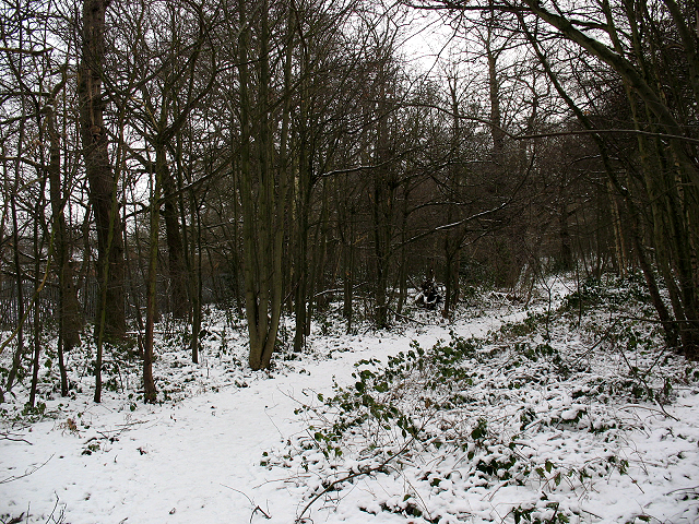Winter in Elmstead Woods (4) - geograph.org.uk - 1655671