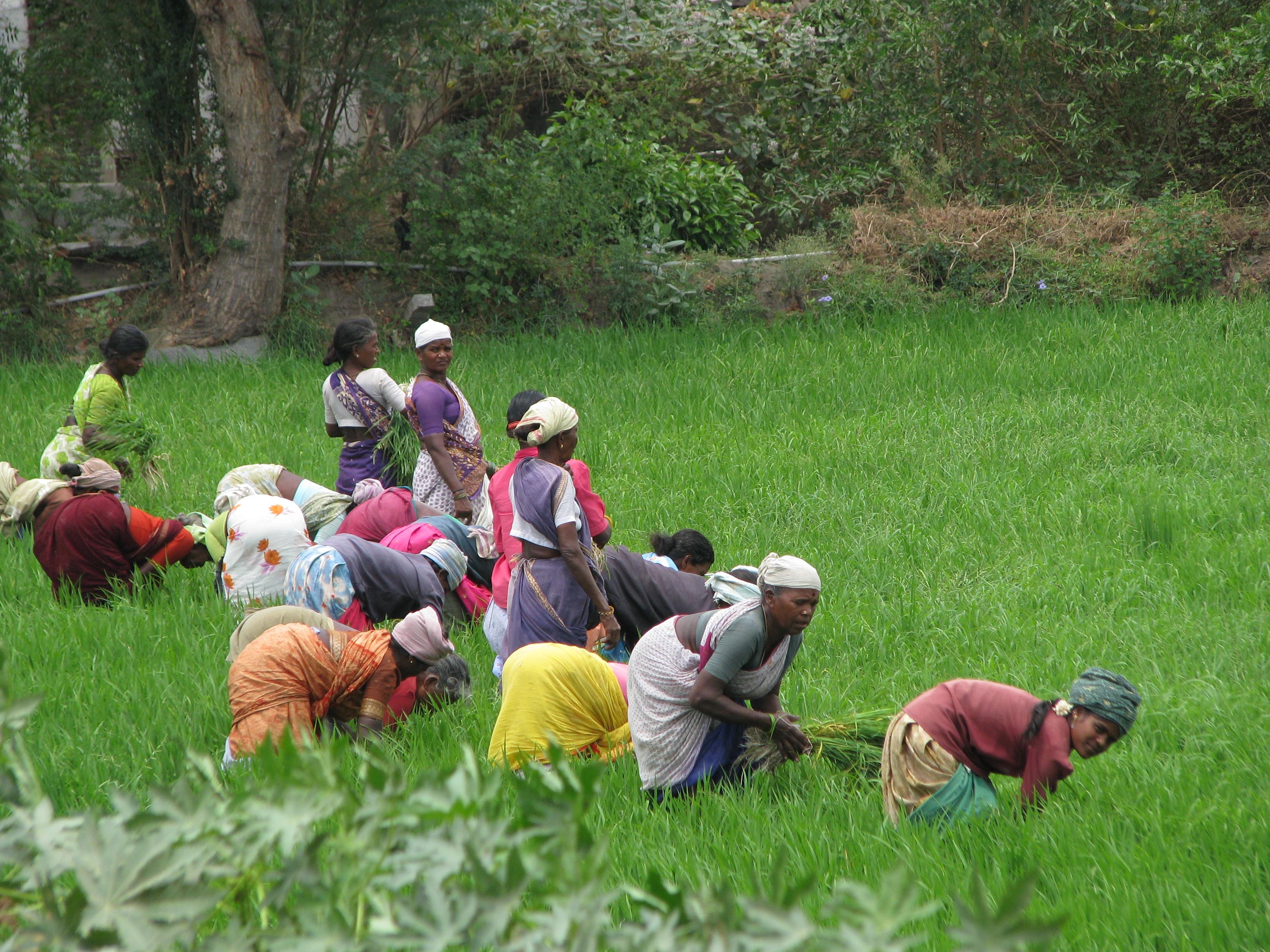 File:Women H... Harvesting Wikipedia