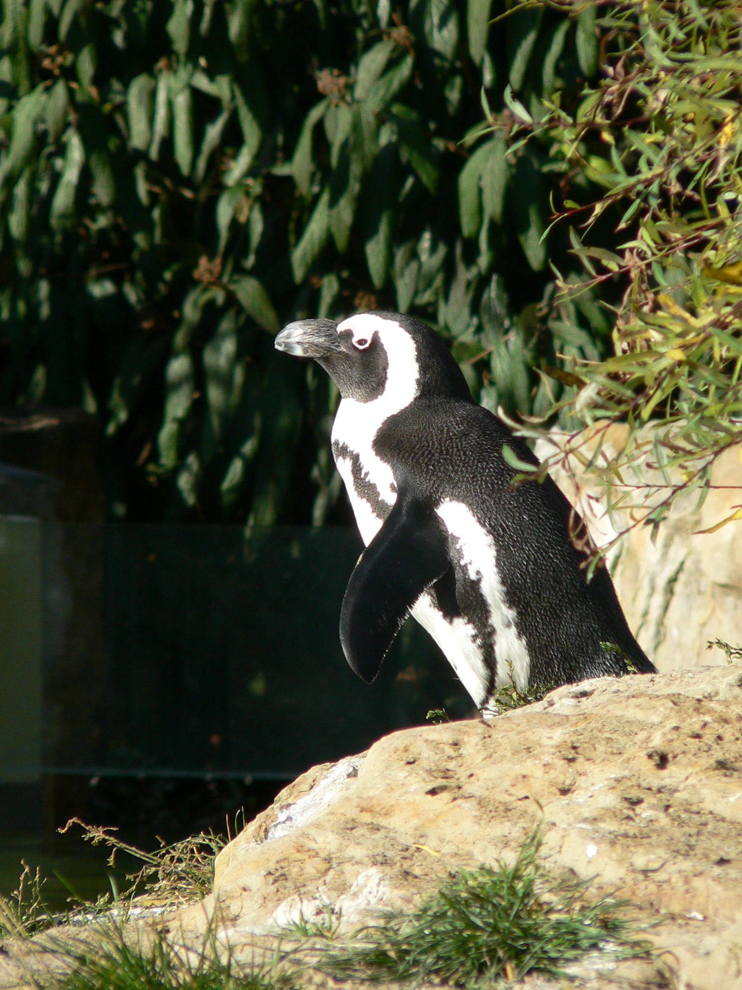 Pinguin Zoo